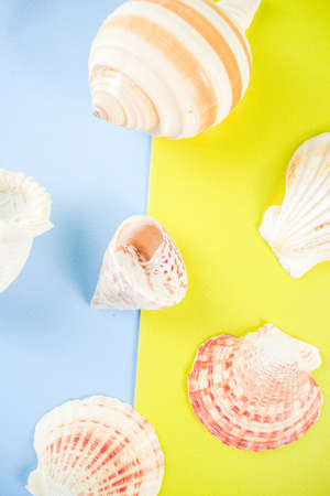 Summer vacation concept, layout, seashells on bright blue yellow background top view simple pattern