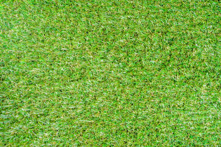 Green grass summer background above copy space, nature backdrop top view