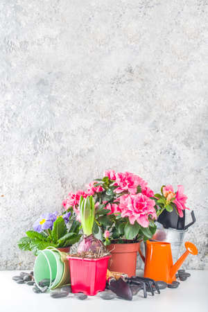 Home gardening, greenhouse concept. Indoor flower garden, Small plant pots with gardening tools. Copy space