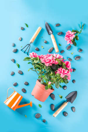 Home gardening flatlay, greenhouse concept. Indoor flower garden, Small plant pots with gardening tools. Above, creative flat lay pattern on turquoise, aquamarine backdrop