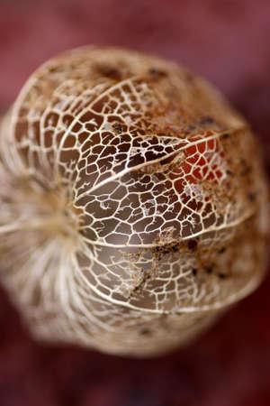 A closeup on a goosebeery peel