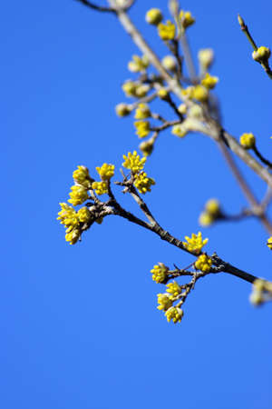 A bush with yellow flowers and a blue sky Stock Photo