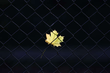 An autumn leaf on a fence photo