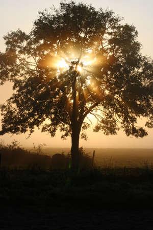 A morning mist sun rise