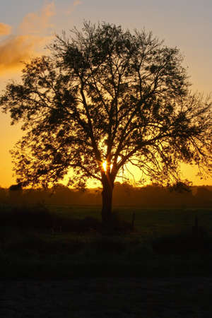 A beautiful sunrise and a nice looking tree Stock Photo
