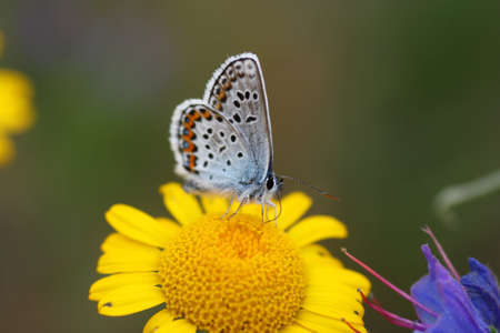 A beautiful butterfly on a yellow flower Stock Photo