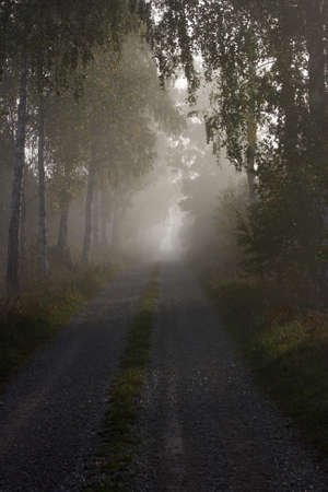 A country road in the morning mist Stock Photo