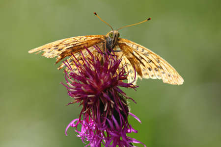 A butterfly on top off a flower