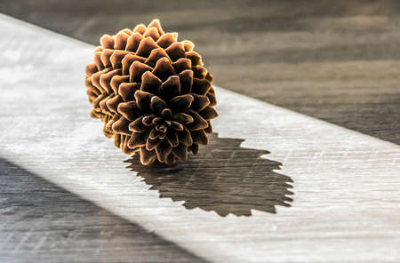 pine cone lies on a wooden table in a ray of sunlight Stock Photo