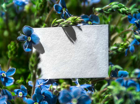 white rectangular horizontal sheet of paper card in blue flowers plants pansies forget-me-nots