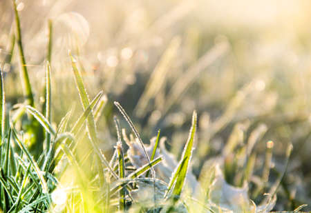 background of a blurred green grass in a frost bokeh Фото со стока