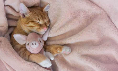 red cat lies resting paw with a pink pig piggy soft sleep