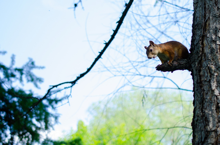Squirrel sits on a branch