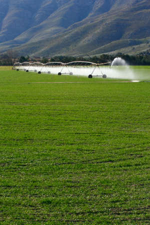 fields being irrigated by mechanical sprayers