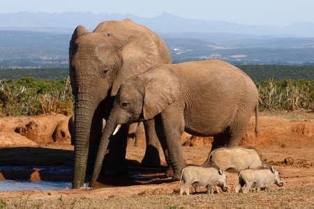 Elefanti in piedi e alcune bolle di soffiaggio  Archivio Fotografico - 1526282