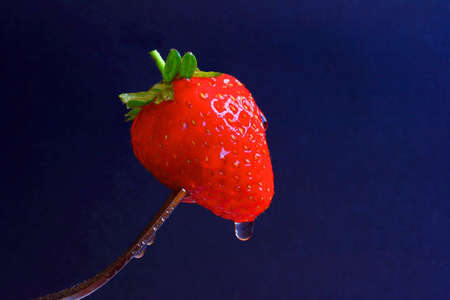 Strawberries on the end of a fork Stock Photo - 2496374