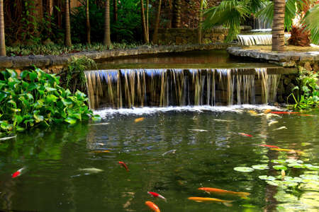 tranquil setting with  a fish pond Stock Photo