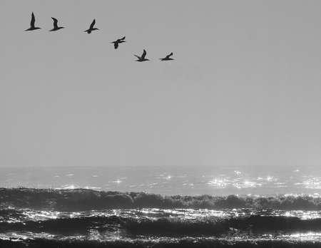 きらめく海の上を飛んでいる鳥の小さな群れと 写真素材
