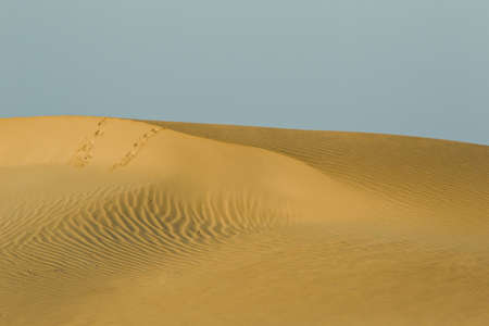 pilgramige: beautiful sand dune with some karge foot prints