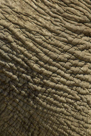 rough elephant skin with some hairs on it  Stock Photo - 19756541