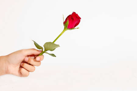handing a rose as a representation of love to someone Stock Photo - 25276756