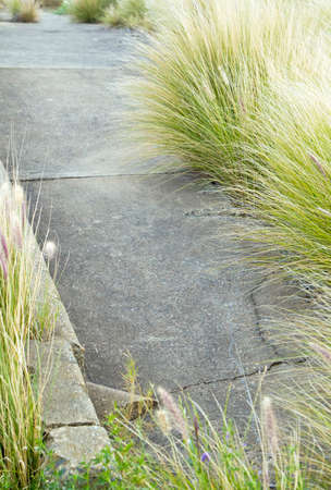 over grown: limited depth of field on a cracked cement pathway with over grown wild grass