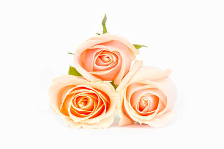 out of focus: three stacked pink roses in soft out of focus on a  white isolated background Stock Photo