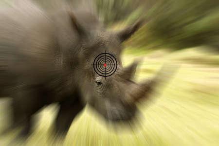 poaching: large white Rhino and target showing a anti- poaching concept