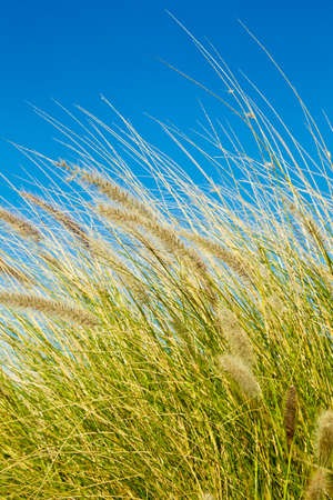 summer's: Wild grasses in bloom in full sun on a hot summers day Stock Photo