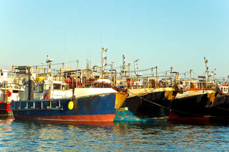 Rows of commercial squid fishing boats moored in a harbor