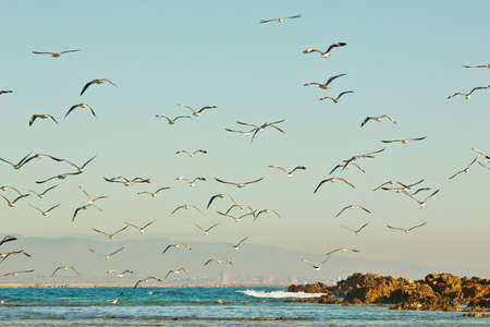 breaking in: beach scene with Seagulls and birds at sunrise flying across the water with waves breaking in the background