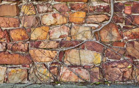 Roots of a plant growing over a old stone wall and causing cracks and damage