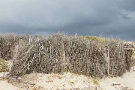 dry tree branches on the beach used as a wind break with dark rain clouds in the distance