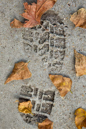 fallen: large footprint in set concrete with dry autumn leaves