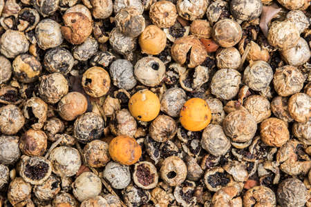 wild seeds and berries lying on the ground in different shades of brown and orange to be used as a background Stock Photo