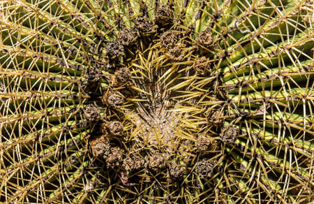 Close up view of a Cactus plant with many spikes in the hot sunlight