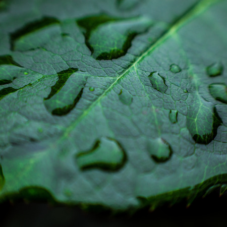 Beautiful green leaf with drops of water, leaf with water drops for background,Rain Drops on small Plant after a Rainstorm Macro,water drop shine in sun light,morning nature,spring nature concept