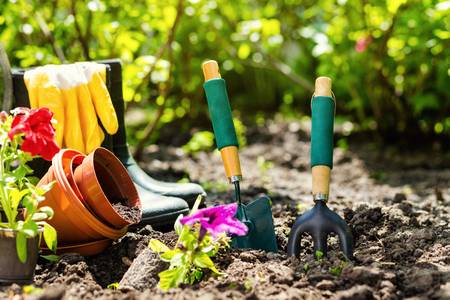 Gardening tools and flowers in the garden. Watering can, rubber boots,  flowers, vases, pots, garden tools, rubber gloves. Gardening composition. Garden, green bushes, yield ground. Working in the garden.