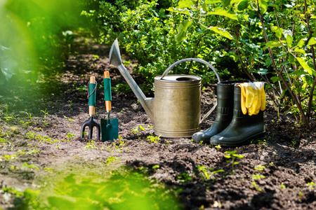 Gardening tools in the garden. Watering can, rubber boots, garden tools, rubber gloves. Gardening composition. Garden, green bushes, yield ground. Working in the garden.