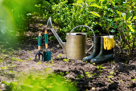 Gardening tools in the garden. Watering can, rubber boots, garden tools, rubber gloves. Gardening composition. Garden, green bushes, yield ground. Working in the garden.