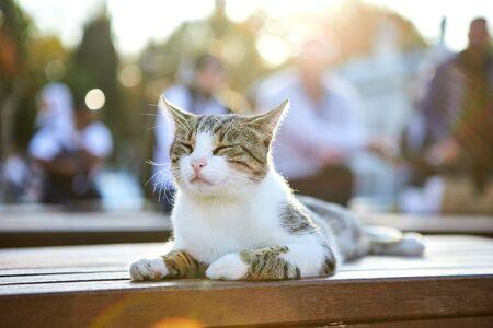 Cat on the street of Istanbul, Turkey