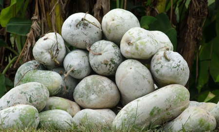 ash gourd: winter melons  Stock Photo