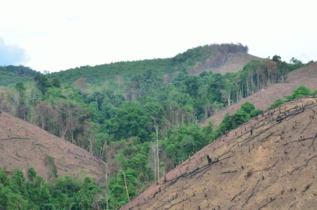 shifting: Shifting cultivation, swidden Agriculture agriculture
