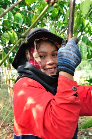SALAVAN,LAO P D R - MARCH 2 ; Unidentified coffee farmer looks and smiles to camera in her coffee farm at vangyawn village,March 2,2013,Lao Ngam,Salavan, Lao p d r