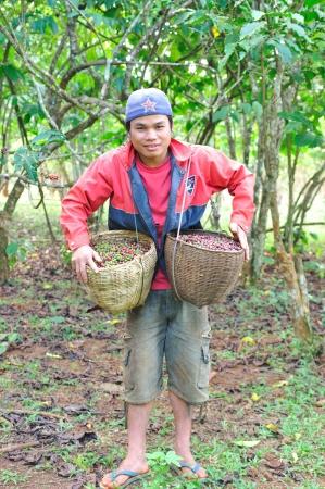 SALAVAN,LAO P D R - MARCH 2 ; Unidentified coffee farmer is showing his coffee berries in baskets at vangyawn village,March 2,2013,Lao Ngam,Salavan, Lao p d r