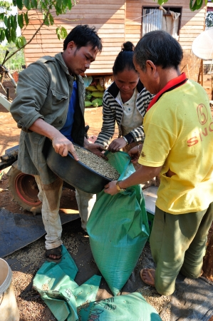 SALAVAN, LAO PDR - FEBRUARY 19  Unidentified coffee farmers packaging coffee beans into plastic bag at Vangyawn village, February 19, 2013, LaoNgam, Salavan, Lao pdr