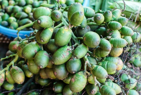Betel palm nut fruit photo