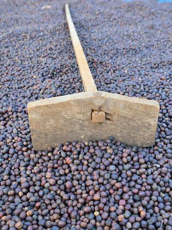 harrow: harrow and dried coffee beans