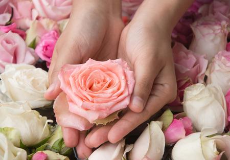women's hands: Pink rose in womens hands Stock Photo