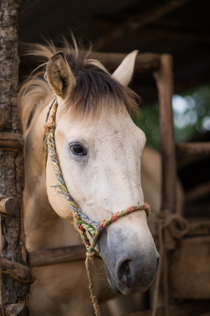 gelding: The head shot of a horse Stock Photo